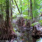 Dżungla amazońska.
