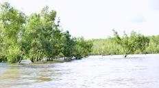tam gdzie morze Arafura łączy się z rzeką Siretsy, drzewa, do których napewno dopłynął