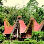 'Tongkonan' czyli domy ludu Toraja.