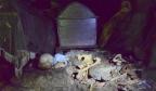 Jaskinie  i skały grzebalne  u Toraja.