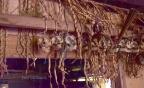 Animistyczny świat Mentawai