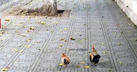 równouprawnieni użytkownicy chodników