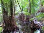 Nasze spotkania z dżunglą