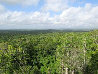 dżungla w El Mirador